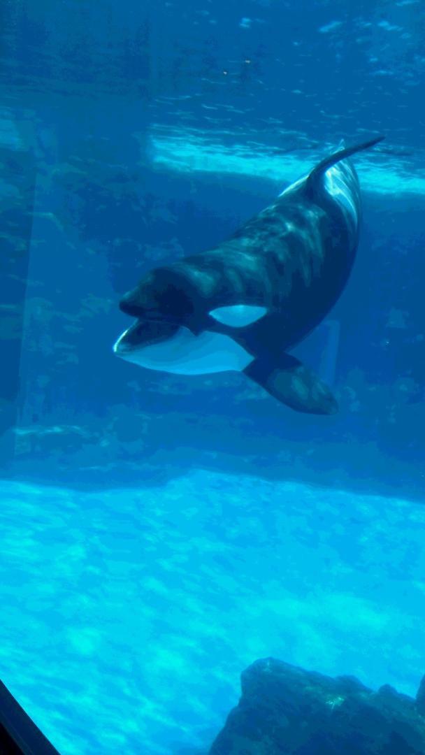 水族館 シャチ
